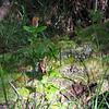 Ohia Lehua<br /> (c) Huihui Kanahele-Mossman