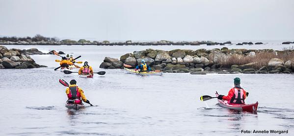 Havsorns_paddling_2