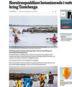 Havsorns_paddling_0