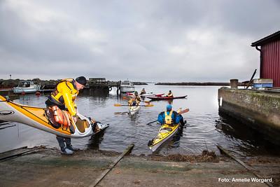 Havsorns_paddling_1