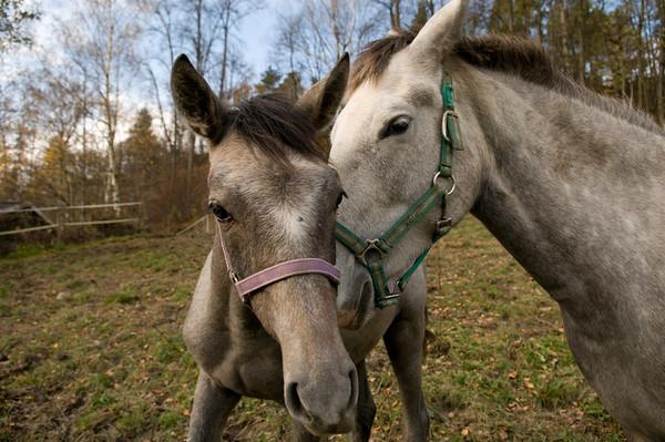 Holm Gård - hester