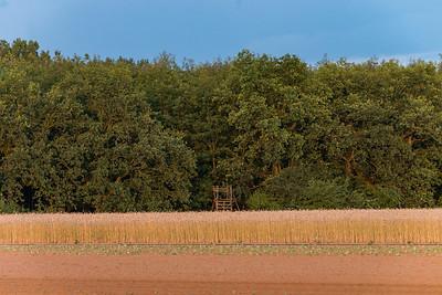 Waldrand und Feld bei Weiterstadt