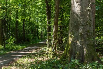 Wald hinterm Oberfeld Darmstadt