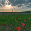 Blumen- und Spargelfelder bei Arheilgen, Weiterstädter Landstraße/Langener Straße  (Foto: Christoph Rau)