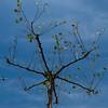 crau20110628-164