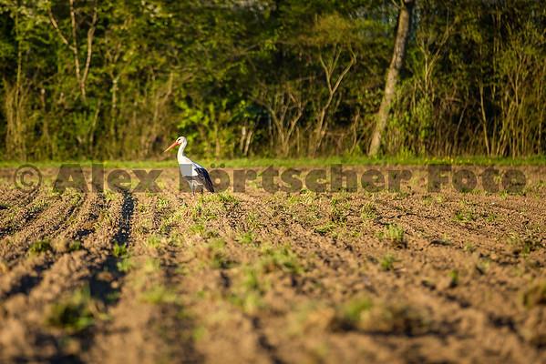 Uster am Greifensee by AlexLoertscherFoto ch 150421C69