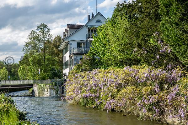 Uster am Greifensee by AlexLoertscherFoto ch 150506C01