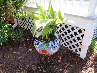 Another new colorful pot at the side of the porch.