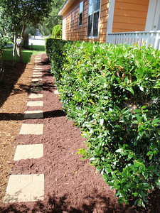 Pathway on side AFTER mulch delivered and spread