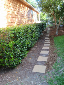 Pathway on side BEFORE mulch delivered
