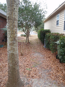 View from the back yard of right side of house.  Holly berry bushes.  Little Crepe Myrtle separates property line as does Wax Myrtles further towards front yard.