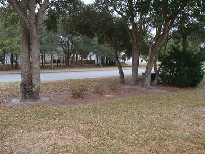 "View from front of house to street thru the ""natural area"" with Live Oaks."