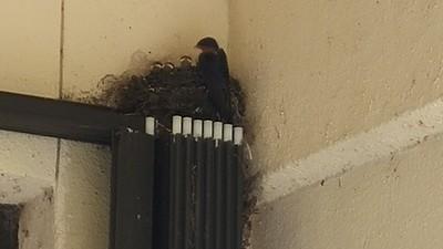 Looks like just 3 baby birds