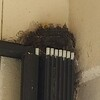 Each time Mamma bird came in, more little bird heads popped up!   Now there are 5!