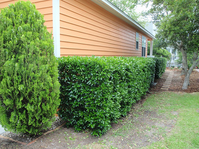 Trim hedges