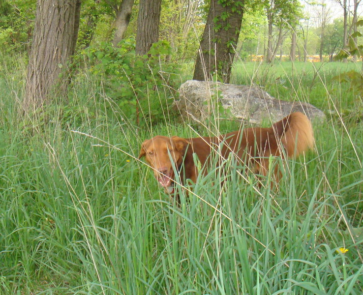 My dog General in the jungle