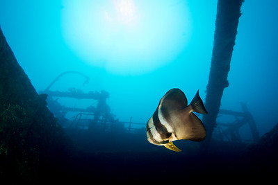 Batfish on the Akibasan Maru