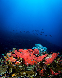 Coral and Sponges