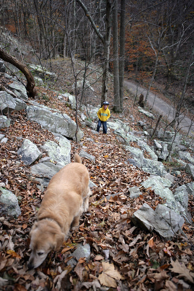 Climbing up a trail at Seneca Rocks, West Virginia. Nov 2013.