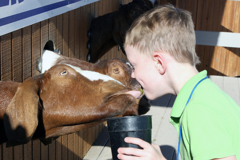 Kyle feeding goats from his mouth.
