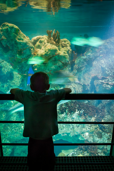Viewing some fist at the National Aquarium, Baltimore, Maryland. August 2014. Digital,