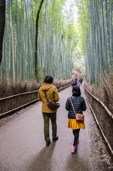 Arashiyama Bamboo Forest in Kyoto, Japan