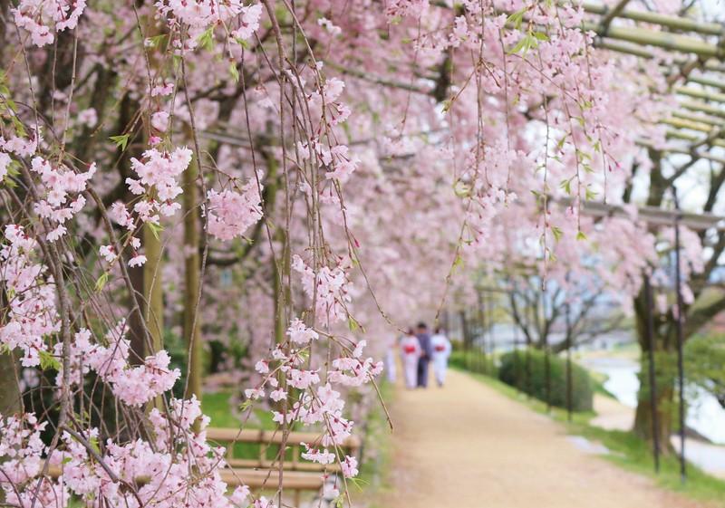 Kyoto ,Japan -Nakaragi-no-mich Path in spring