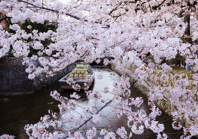 Kyoto,Japan- Takasegawa Canal Ichino-Funairi in spring