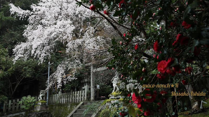 Deep Silence in Spring