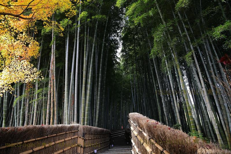 Adahino Nenbutsuji bamboo stairway