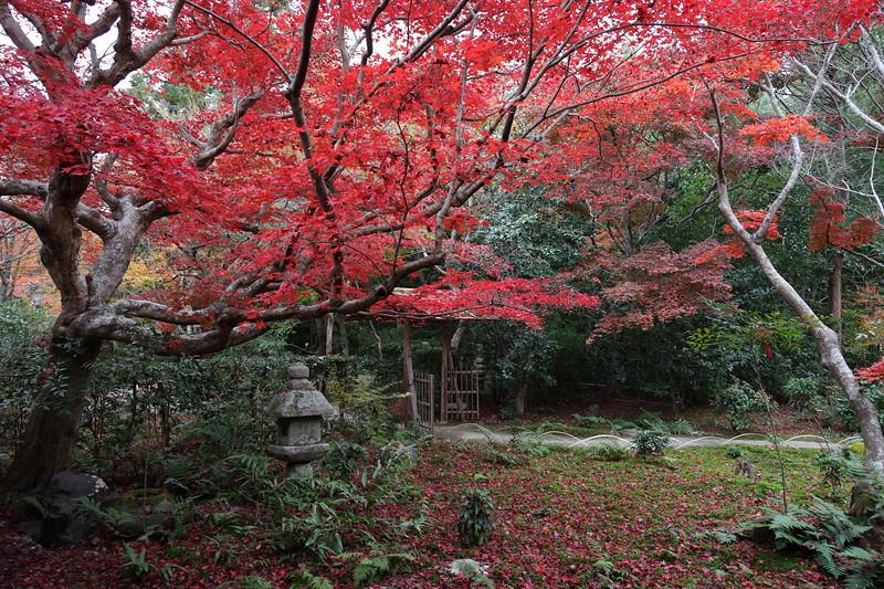 December Autumn Foliage in Sagano ,Kyoto