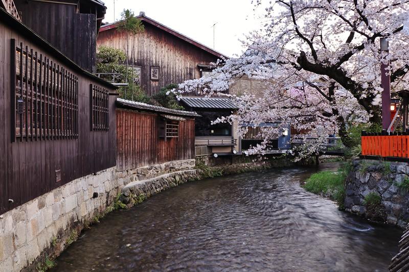 Kyoto snap - Gionshirakawa in spring 京都  祇園白川