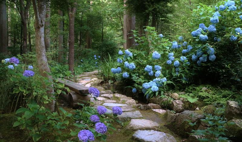 Hydrangeas path /  Kyoto Sanzenin temple