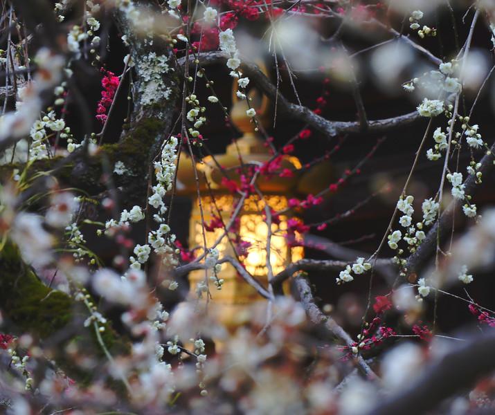 Kyoto impressions - Lantern Lit
