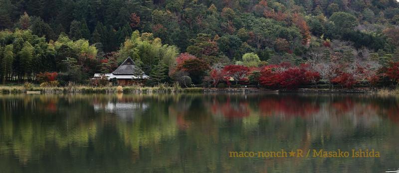 Beautiful autumnal foliage in Kyoto ,Japan - Sagano Hirosawano-ike pond