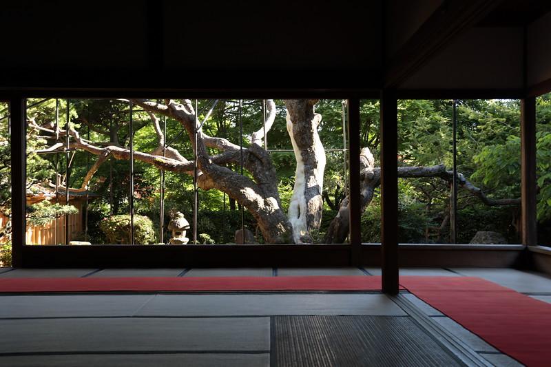 700 years old pine tree -Hosen in temple Kyoto 京都大原 宝泉院