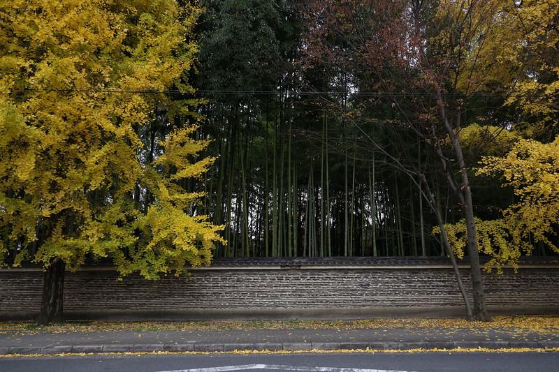 Gingyo Street in Kyoto- along the wall of Daitoku-ji