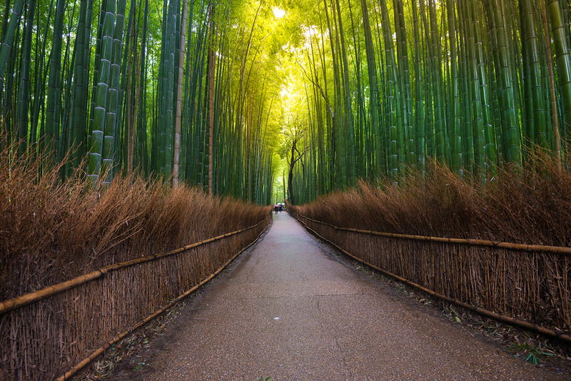 Bamboo Alley section of Arashiyama Bamboo Grove. Editorial credit: structuresxx / Shutterstock.com