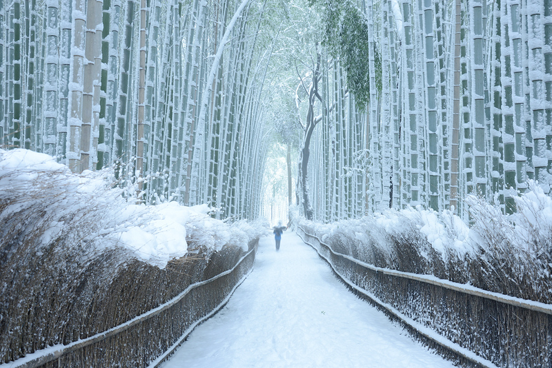 Arashiyama Bamboo Grove in winter. Editorial credit: saraporn / Shutterstock.com
