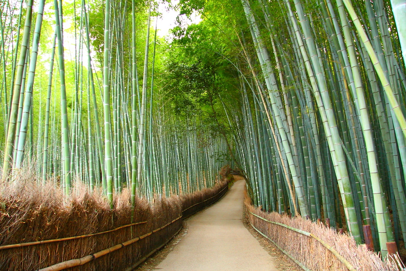 The upper (western) section of the Arashiyama Bamboo Grove. Editorial credit: Sergii Rudiuk / Shutterstock.com