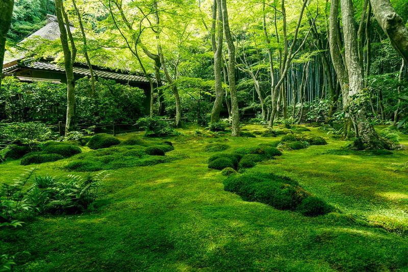 Gio-ji Temple garden. Editorial credit: Gio-ji Temple garden / Shutterstock.com