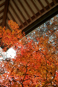 Bishamon-doTemple, Roof detail  In Autumn with red Maple Tree Foliage