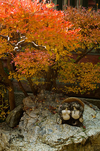 Bishamon-do Temple, Tanuki and autumn foliage