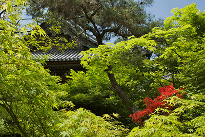 Bishamon-doTemple Roof in Spring  Green Momiji, red Azalea