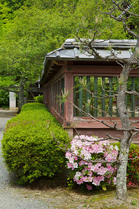 Bishamon-do Temple in Spring  Lattice Work Fence with Azalea