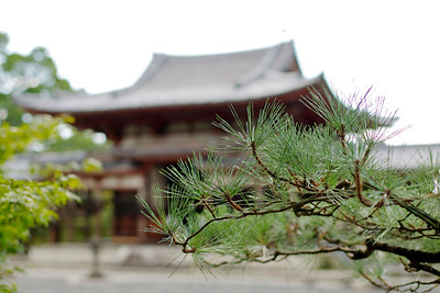 Byodo-in Temple, famous Phoenix Hall Building  Cedar Branch in selective focus
