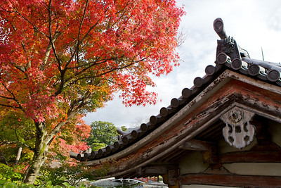 Byodo-in Temple, World Cultural Heritage   Temple Building, Roof with Gable in Autumn Foliage