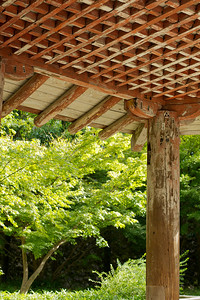 Byodo-in Temple, Section of resting place wooden roof and green maple tree