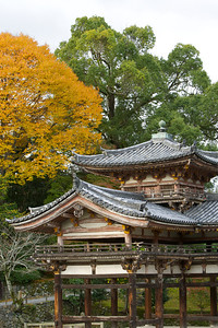 Side of Byodo-in Temple with Autumn Foliage