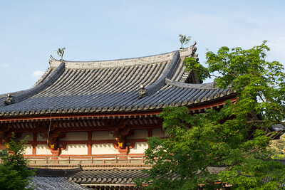 Byodo-in Temple, Phoenix Hall from back with green Maple Trees  Japanese World cultural Heritage Roof in full Sunshine